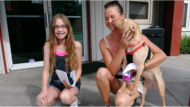 Two pitbulls rescued from dogfighting find forever families