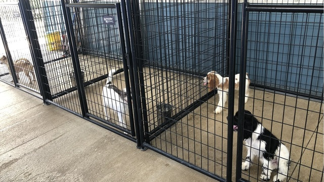 Jackson Co. Humane Society participating in Clear the Shelters Day