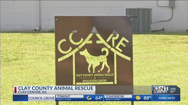 Clay County rescue celebrating for Clear the Shelter Day