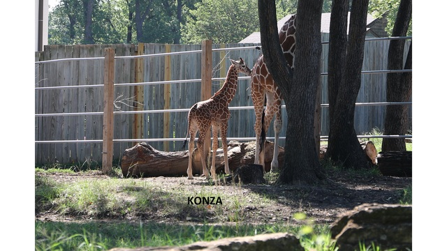 gallery baby elizabeth and konza at the topeka zoo