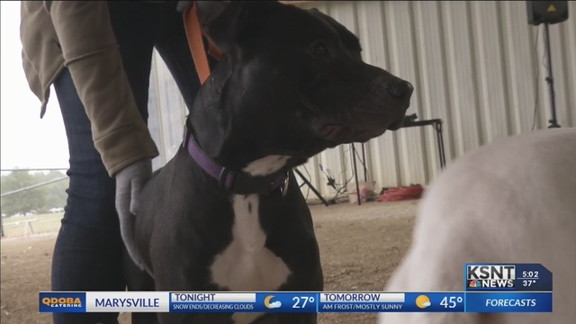 Coldwell Bankers hold 2nd annual dog adoption event