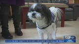 Special dog helping students at Topeka High School