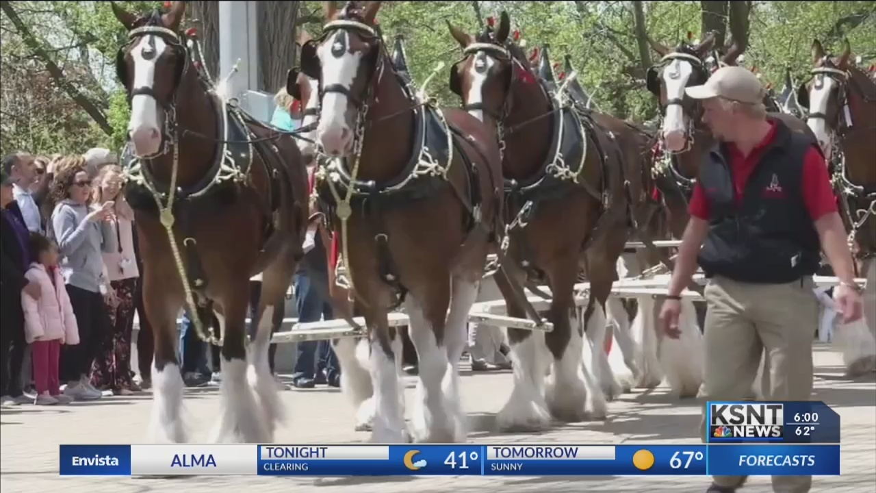 Clydesdales' visit highlights new beer law