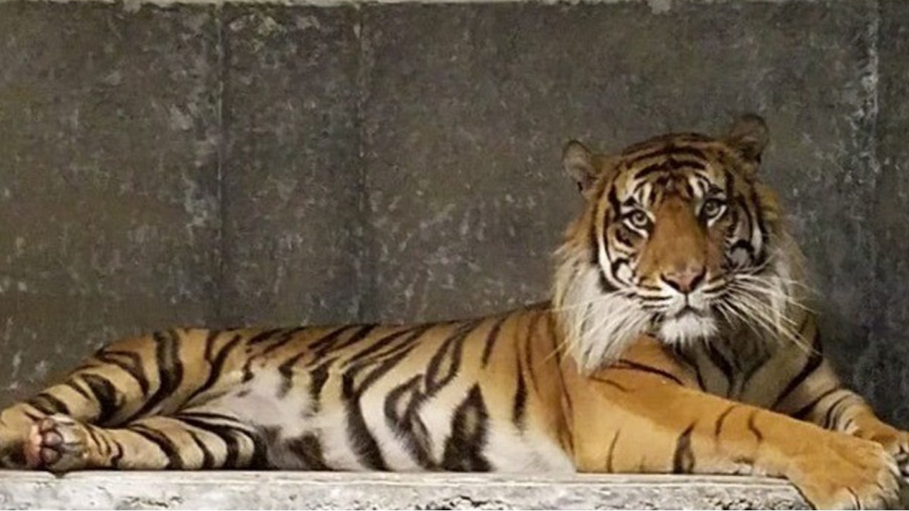 FULL REPORT: Topeka Zoo says zookeeper violated protocol before